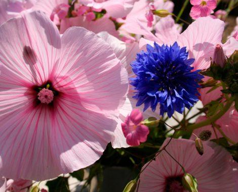 bloemen-1